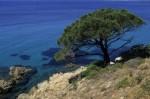 Frankreich: Baum vor blauem Meer