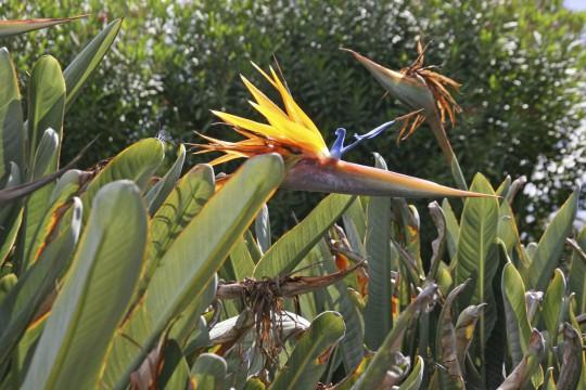 Sydney: Royal Botanic Gardens