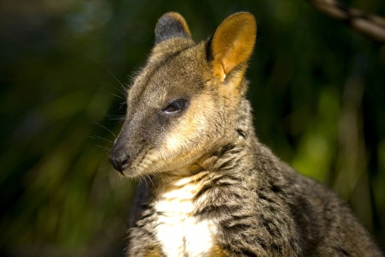 Sydney: Wildlife Sydney Zoo