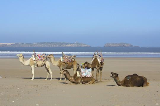 Marokko: Strand Essaouria