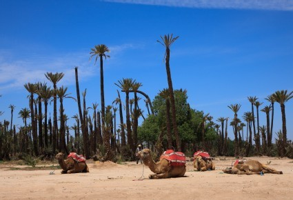 Marrakesch: La Palmeraie
