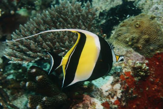 Seychellen: St. Anne Marine National Park