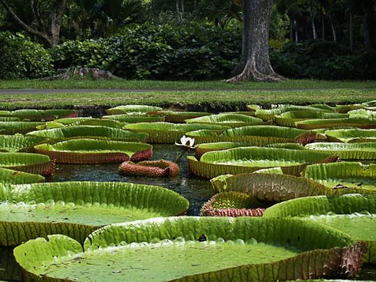 Sehenswuerdigkeiten Seychellen Botanischer Garten Der Seychellen