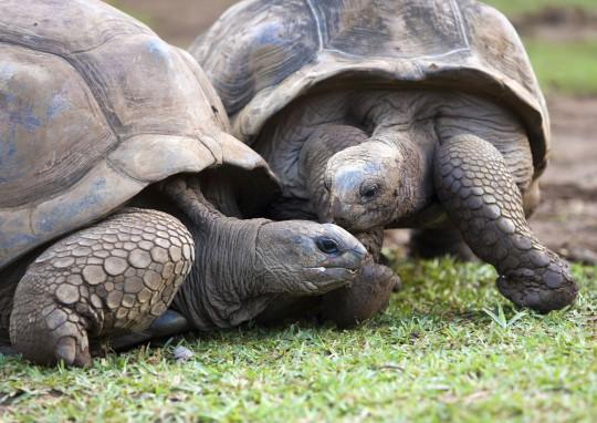 Seychellen: Curieuse Marine National Park