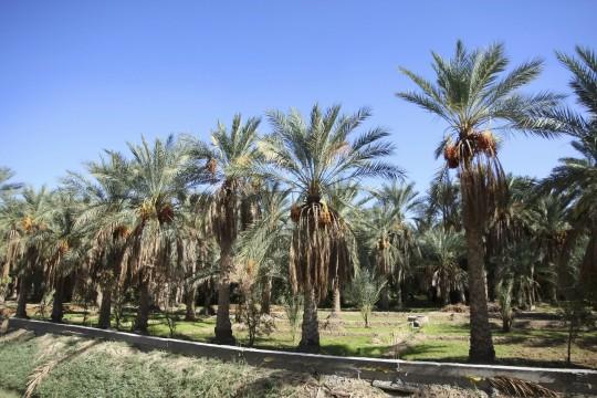 Djerba: Tozeur