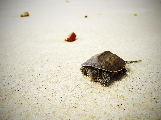 Hammamet: Schildkröte