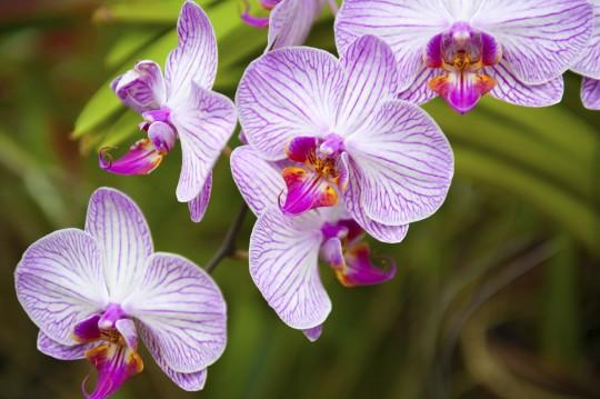 Sri Lanka: Peradeniya Botanical Gardens