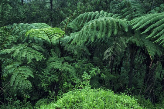 Sri Lanka: Sinharaja Forest Reserve