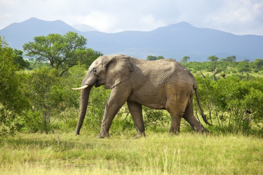 Südafrika: Kruger Nationalpark