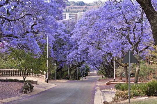 Südafrika: Pretoria