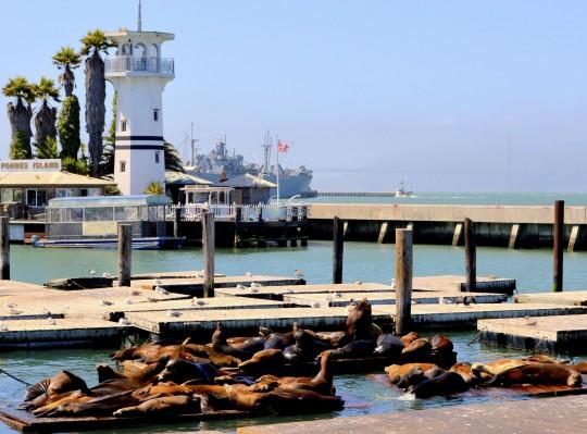 San Francisco: Pier 39