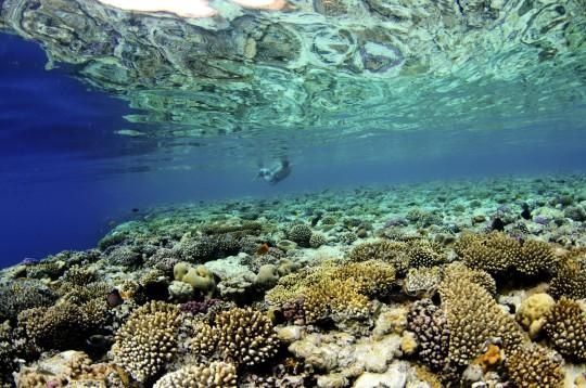 Südsinai: Korallenriff
