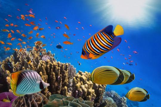 Sharm El Sheikh:Korallenriff und tropischen Fische