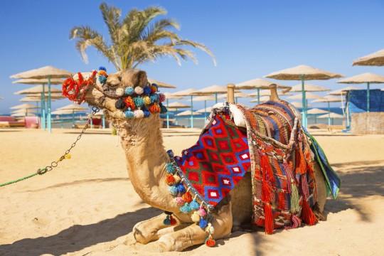 Hurghada: Kamel