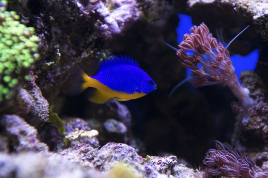 Hurghada: Koralle und Fisch