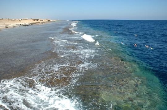 Hurghada: Coral reef