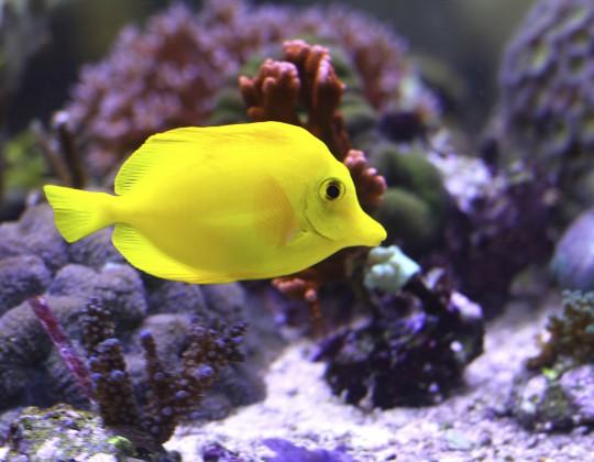 Hurghada: Red Sea Aquarium