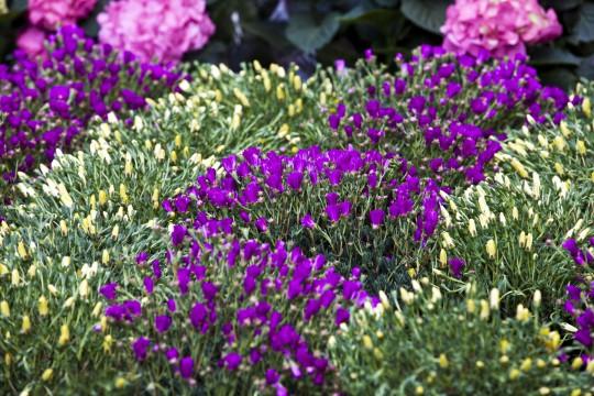 Ligurien: Botanischer Garten Hanbury