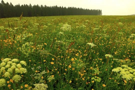 Schwarzwald: Naturpark Schwarzwald Mitte/Nord