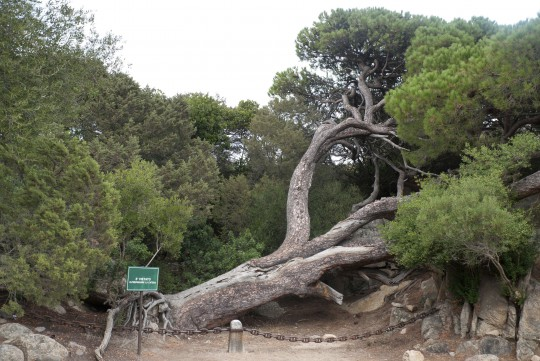 Sardinien: Casa Garibaldi