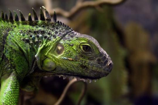 Reptilienhaus / Reptile zoo