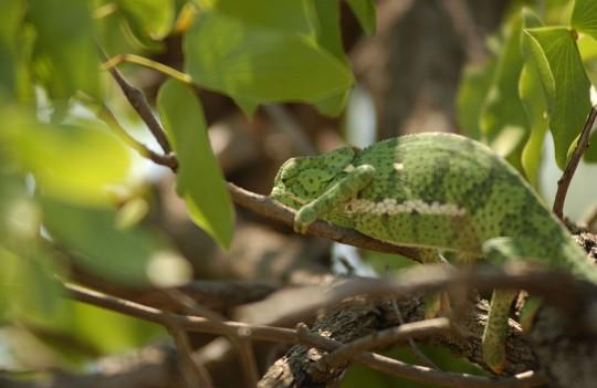 Allgäu: Reptilien-Zoo Scheidegg