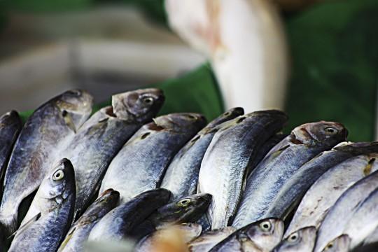 Fischmarkt (Symbolbild)