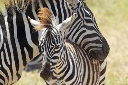 Lüneburger Heide: Serengeti-Park Hodenhagen