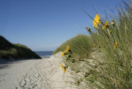 Ostfriesland: Norderney