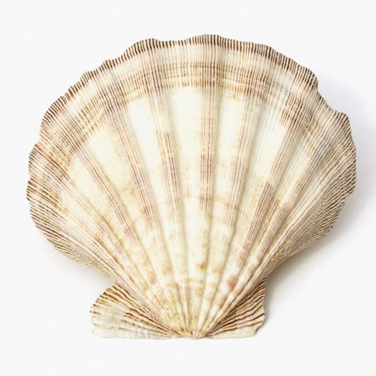 Korfu: Corfu Shell Museum, Benitses