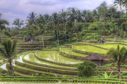 Bali: Reisterrassen von Jatiluwih