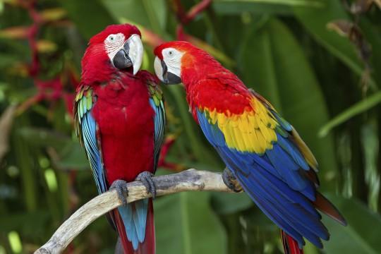 Bali: Bali Bird Park