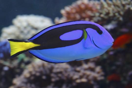 Singapur: S.E.A. Aquarium