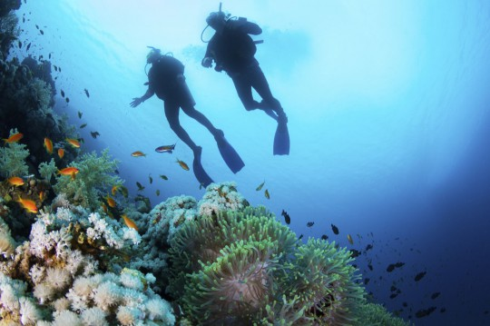 Piscis Diving (Symbolbild)