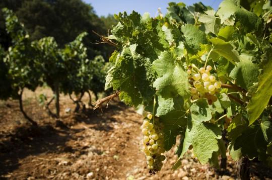 Costa del Sol: Museo del Vino de Ronda