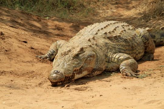 Kenianische Küste: Mamba Crocodile Village