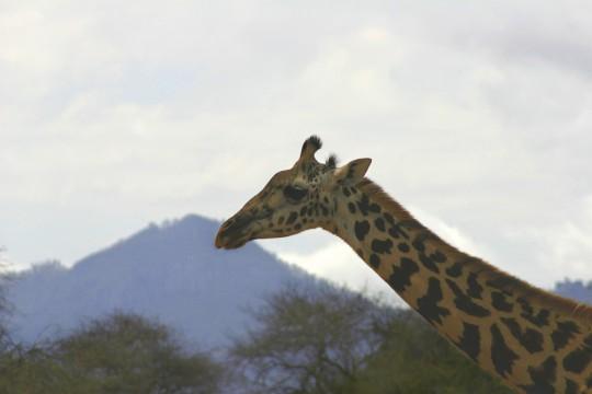 Kenianische Küste: Taita Hills Game Sanctuary