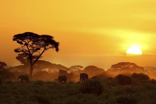 Kenianische Küste: Amboseli National Park