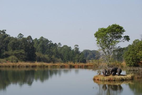 Swasiland: Flusspferde
