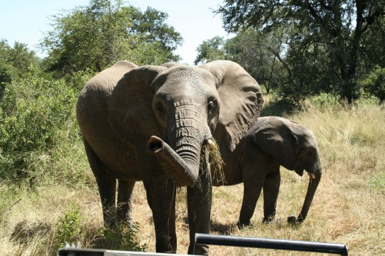 Swasiland: Hlane Royal National Park