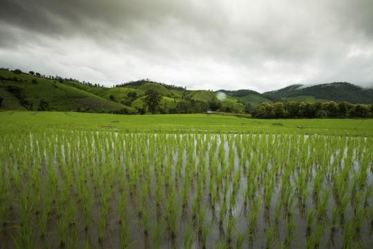 Saigon & Südküste: Reisfelder