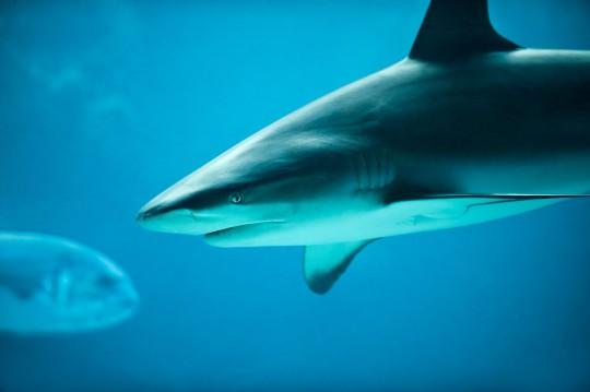 Mittlere Adria: Aquarium Cattolica