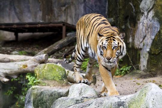 Obere Adria: Zoo Punta Verde