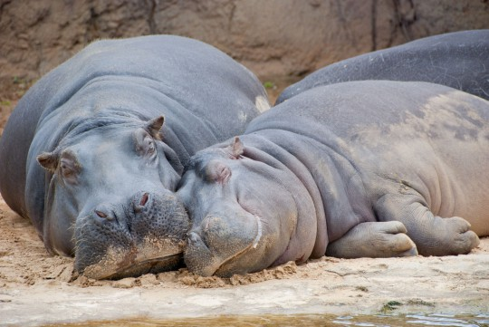 Toskana: Giardino Zoologico di Pistoia