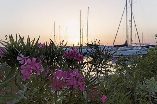 Toskana (Küste & Elba): Hafen - San Vincenzo's