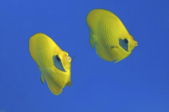 Unterwassererlebnis Semi-U-Boot