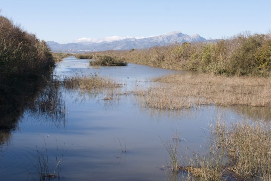 Mallorca: Naturpark S'Albufera