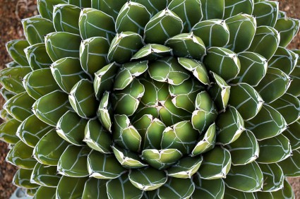 Mallorca: Botanicactus