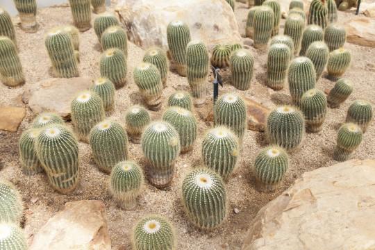 Gran Canaria: Jardin Canario - Botanischer Garten