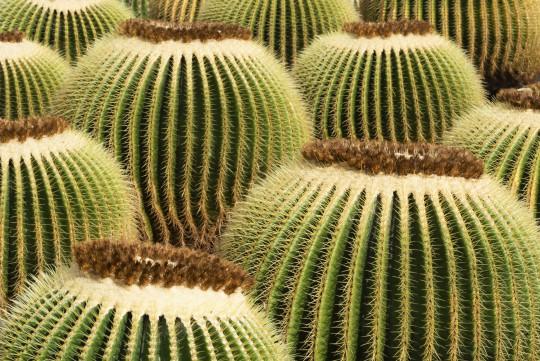 Lanzarote: Jardín de Cactus